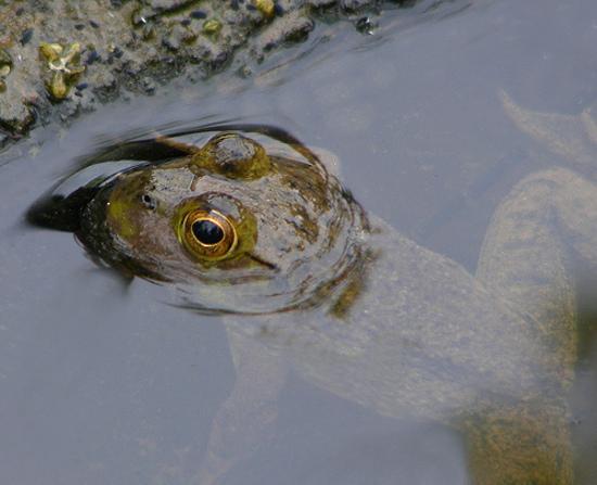 Frogbyjoshme17