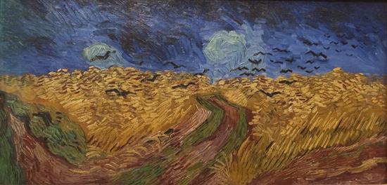 korenveld met kraaien