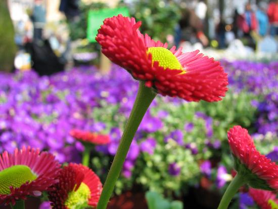 scaledflower