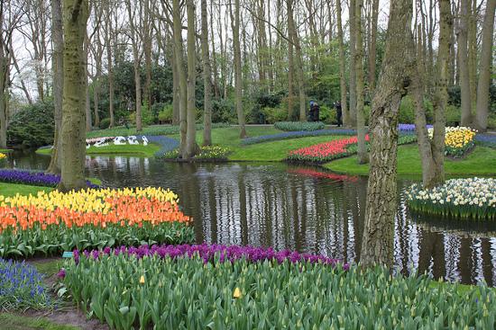 Springtime At Keukenhof Gardens Po Ferries Blog
