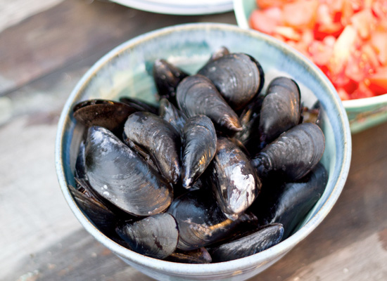 Mussels in europe